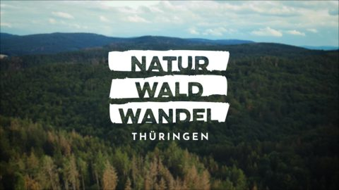 Music for Videos - Natur Wald Wandel